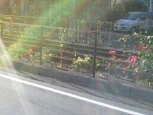 線路脇の花壇