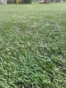 芝生で遊ぼう